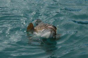 img_1436-fish-coming-up