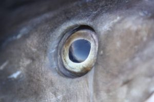 img_2252-cods-eye